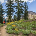 Wildflower displays along the Sierra Buttes Trail. - Incredible Hikes for Alpine Wildflowers