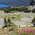Mount Tallac Trail.- Incredible Hikes for Alpine Wildflowers