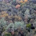A mixture of grey pine (Pinus sabiniana), black oak (Quercus kelloggii) and interior live oak (Quercus wislizeni) cover this Yuba River Canyon slope.- A Guide to Fall Adventure in California
