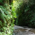 Fern Canyon.- Northern California Winter Road Trip