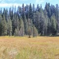 The meadow at Crane Flat.- Winter in Yosemite National Park