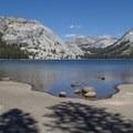 Tenaya Lake's west shore.- Backpacking Trips in Yosemite National Park
