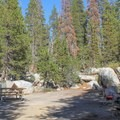 Porcupine Flat Campground.- Guide to Camping in Yosemite National Park