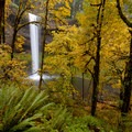 South Falls through the thick, fall leaves.- Best Fall Hikes Near Portland