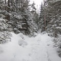 The trail to Avalanche Pass.- Exploring 5 Frozen Wonderlands of America