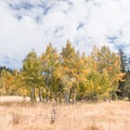 Aspen grove on the left side of the path.- A Guide to Fall Adventure in California