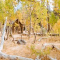 Backyard of the cabin.- A Guide to Fall Adventure in California