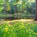 Archery Pond in Bear Brook State Park is open to fly fishing and has a few benches and picnic tables nearby.- A Fall Family Road Trip Through New Hampshire