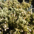Don't forget to look down and observe the rich plant life that lives in these harsh conditions.- Haleakalā National Park