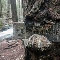 Burstarse Creek below Burstarse Falls.- 5 Reasons to Visit Mount Shasta in the Winter