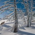 Backcountry skiing with the pups.- Winter Essentials for Your Adventure Dog