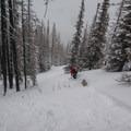 Enjoying the open tree-skiing on flanks of Table Mountain.- Backcountry Skiing in Washington