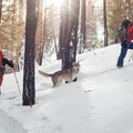 Skinning up a snow-covered path in the winter.- A Winter Gear List for your Adventure Dog