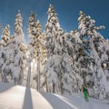 Skin track through a stand of old-growth hemlock in the Todd Lake Backcountry.- Backcountry Skiing the Pacific Crest