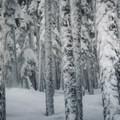 Enjoying the stashes at Yodelin near Steven's Pass.- Backcountry Skiing in Washington