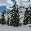 Dramatic views near Snow Lake with the dog in tow.- Winter Essentials for Your Adventure Dog