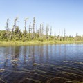 Lilies and grasses grow up from the river bed.- Three Adirondack Paddling Adventures for your Bucket List