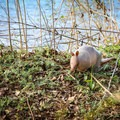 An armadillo near the trail at Bonnet Carre Spillway.- 3-Day Adventure Itinerary in New Orleans, LA