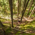 Cruising through the mossy forest at South Whistler.- Mountain Biking in British Columbia