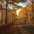 Ride through 9 miles of colorful fall foliage on the Burlington Bike Path.- Ultimate Leaf-Peeping Road Trip through New England
