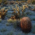 Barrel and cholla cacti in Anza-Borrego State Desert Park.- The Ultimate Southwest Deserts Road Trip (CA + AZ)