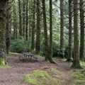 Typical walk-in campsite at Carl G. Washburne Memorial State Park Campground.- Best Year-Round Camping in Oregon
