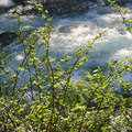 Metolius River from Candle Creek Campground.- A Guide to Camping in Oregon