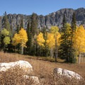 Aspen glow in the autumn along the Cardiff Fork Trail.- 5 Ways to Experience Autumn in Utah