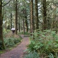 The path to the walk-in tent sites is short and level at Carl G. Washburne Memorial State Park Campground.- Best Year-Round Camping in Oregon