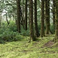 The forest floor around some of the walk-in tent sites is covered in a lush carpet of moss.- Underused Gems of the Oregon Coast