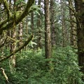 Lush forest surrounding Carl G. Washburne Memorial State Park Campground.- Best Year-Round Camping in Oregon