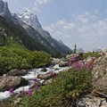 Fireweed wildflowers along the trail in Cascade Canyon.- Best Hiking in Grand Teton National Park