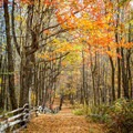 Cataloochee Trail in Great Smoky Mountains on the Western North Carolina side of the park. - Must-See National Parks in the Autumn