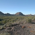 Countless cacti along the Apache Trail Scenic Byway.- 5 Warm-Weather Winter Getaways