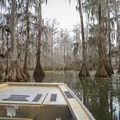 The slow-traveling swamp tours pass through cypress groves draped in Spanish moss, and guides describing the ecosystem and wildlife.- Louisiana's Cypress and Sea