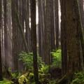 The dense forest of the coastal headland.- Tillamook Head Hike
