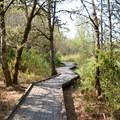 Jackson-Frazier Wetland.- Western Birding Hotspots