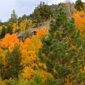 Aspens in fall above Sorensen's Resort.- A Guide to Fall Adventure in California