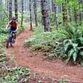 Descending the Willamette Valley's Dallas Trail.- Oregon Fall Adventures