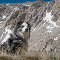 A stoic pup stops for a photo op on the Meysan Lake Trail.- 25 of the West's Best Dog-Friendly Hikes
