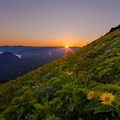 Sunset from Dog Mountain.- Under-the-radar Wildflower Spotting