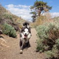 On the trail in the Sierra.- Our 10 Favorite Dog-Friendly Backpacking Trips