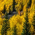 Peak aspen color.- 5 Epic Hikes in the Sawatch Range + Elk Mountains