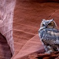 Owl canyon is home to a family of great horned owls.- Slot Canyons of the West