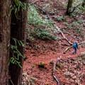 Much of the Phleger Estate Loop Hike is along steep ravines.- 10 Microadventures Near San Francisco