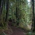 The trail to Drift Creek Falls.- Drift Creek Falls Hike