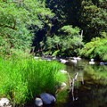 Drift Creek from the Harris Ranch Trail.- Best Hikes on the Central Oregon Coast