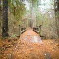 A creek crossing along the Caroline Dormon Trail.- Incredible Louisiana Hiking + Biking Trails For Your Bucket List