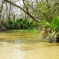 Palmettos and Spanish moss overhanging the water near Franklin Canal.- Paddler's Guide to Louisiana Swamps, Lakes + Bayous