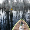 Bright yellow signs clearly guide paddlers up and down the Lake Chicot Water Trail. - Adventurer's Guide to Central Louisiana